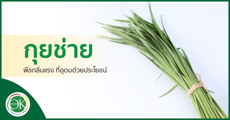 กุยช่าย พืชกลิ่นแรง ที่อุดมด้วยประโยชน์