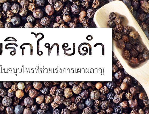 พริกไทยดำ หนึ่งในสมุนไพรที่ช่วงเร่งการเผลาผลาญ