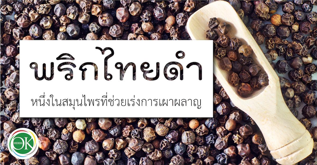 พริกไทยดำ หนึ่งในสมุนไพรที่ช่วยเร่งการเผาผลาญ